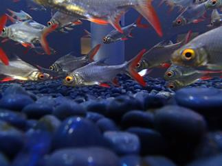 You might not have thought to shoot the aquarium from this angle with an Olympus TG2..
