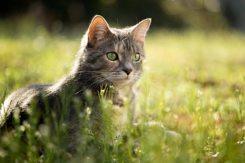 Use a telephoto lens for stunning pet portraits