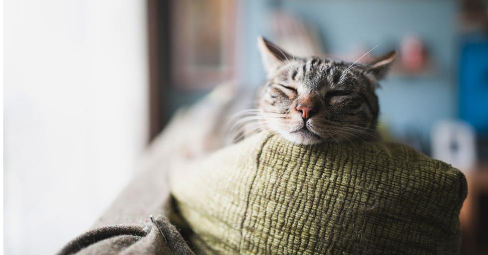 Pets love relaxing music