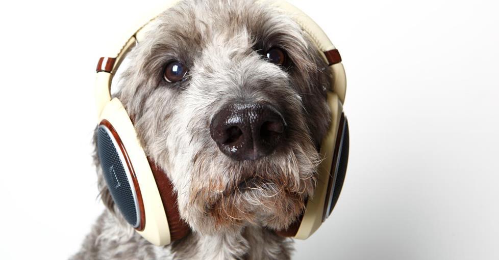 Dogs like music too