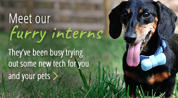 See what our furry interns have been up to