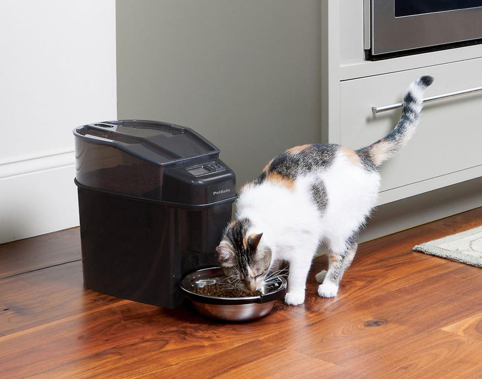 Cat eating out of a Simply Feed feeder.