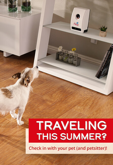 Travelling this summer? Check in with your pet (and petsitter)!