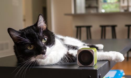 Dogs and cats can benefit from listening to music