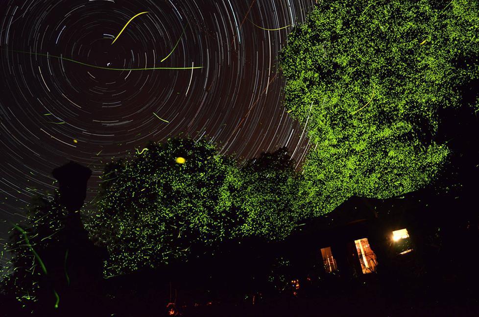 Fireflies!!!