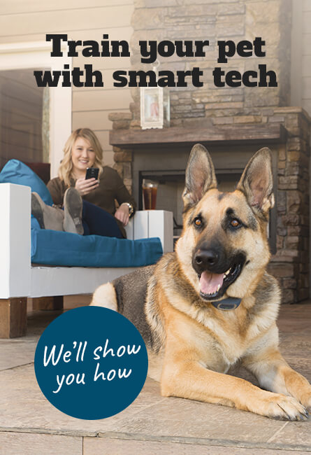 Train your pet with smart tech