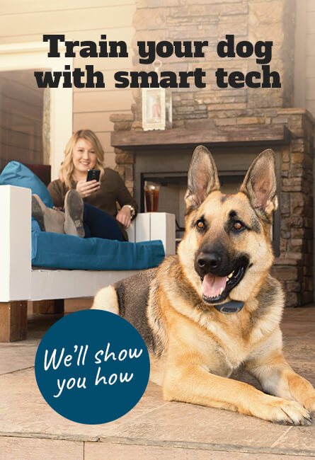 Train your dog with smart tech