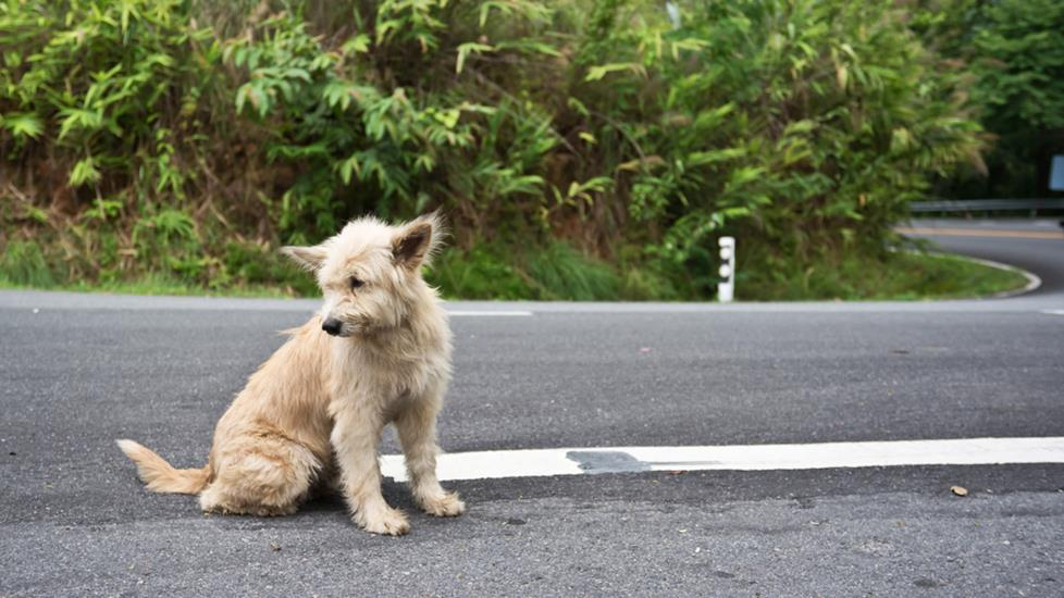 Lost dog in the road
