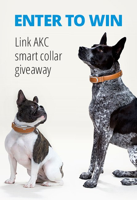 Link AKC smart dog collar giveaway
