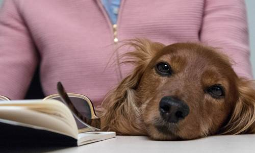 10 tips for taking your dog to work