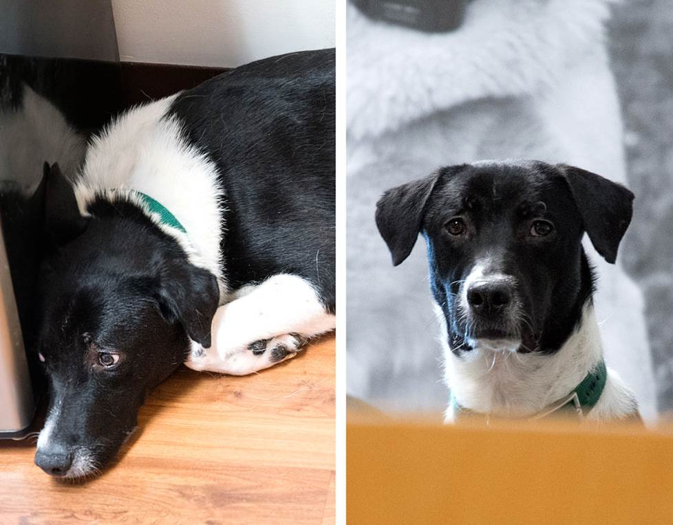 Bentley's before and after (he now pops his head up to peek out at passersby!