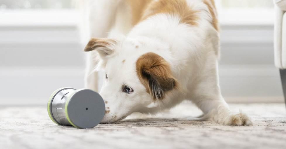 PetSafe Kibble ChaseT Roaming Treat Dropper Interactive dog toy for feeding and play time
