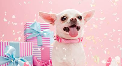 Top 10 gifts for dogs and cats