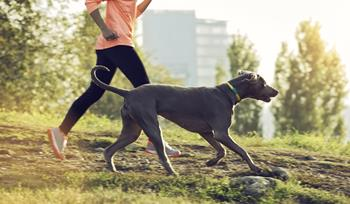 GPS and fitness trackers for pets