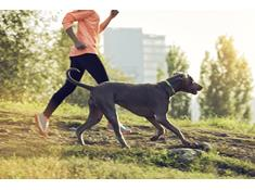 GPS trackers and activity monitors keep your pet safe and healthy