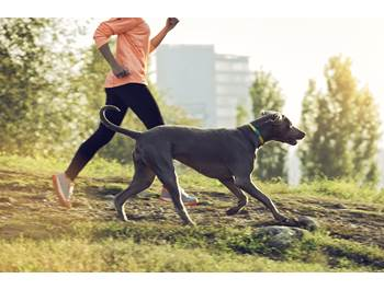 Pet GPS & Activity Monitors