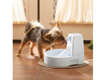 Pet Feeders & Water Fountains