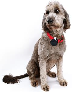 PocketFinder Pet GPS Locator on collar