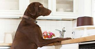 Belkin WeMo NetCam lets you tell your dog to get off the counter.