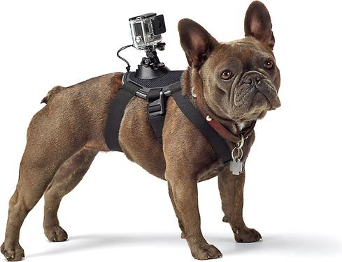 Ever wonder what the world looks like for your best buddy? The GoPro Fetch Dog Harness will help you find out.