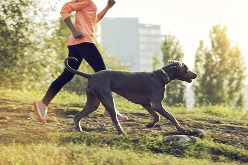 FitBark helps you and your pet live a long, healthy, happy life together.