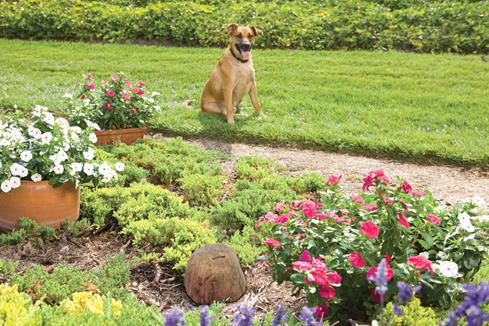 This guy digs flowers, but not literally, thanks to the Pawz Away Outdoor Pet Barrier.