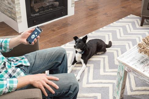 PetSafe's SMART DOG® collar lets you train your pooch with your smartphone and a free training app.