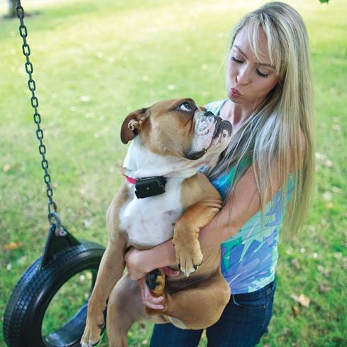 Teach your tenacious friend to stay safe in his own yard with the PetSafe Stubborn Dog In-ground Fence.