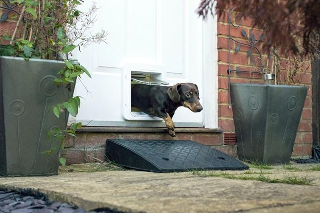 Dachshund uses Microchip Pet Door Connect to exit house