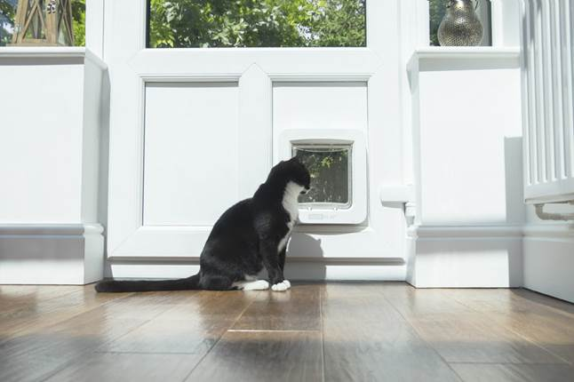Cat looks through SureFlap Microchip Pet Door Connect