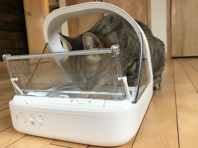 Radar the cat using the SureFeed Microchip Pet Feeder