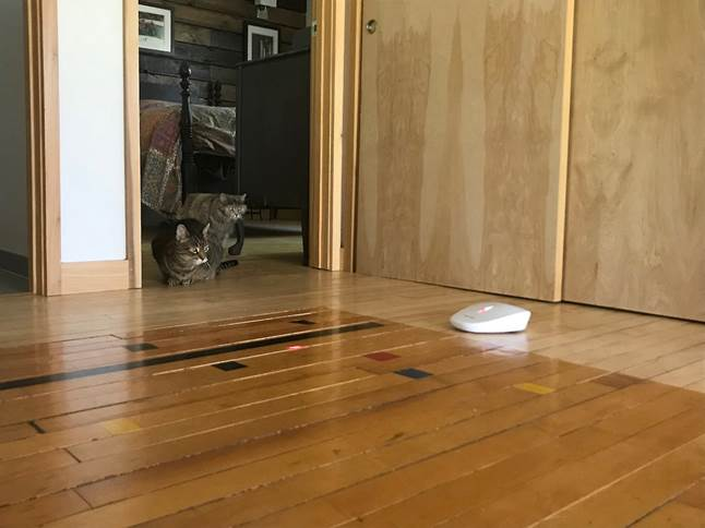 Cats enthralled by PetSafe Laser Chase Cat Toy