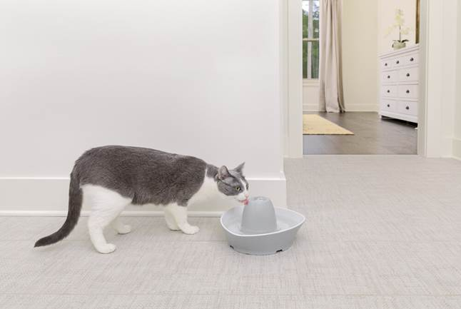 Cat drinking from PetSafe Creekside Ceramic Pet Fountain