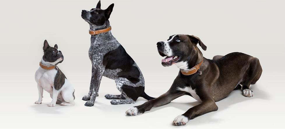 Link AKC is an award-winning pet activity monitor and activity tracker that fits lovable dogs of all sizes.