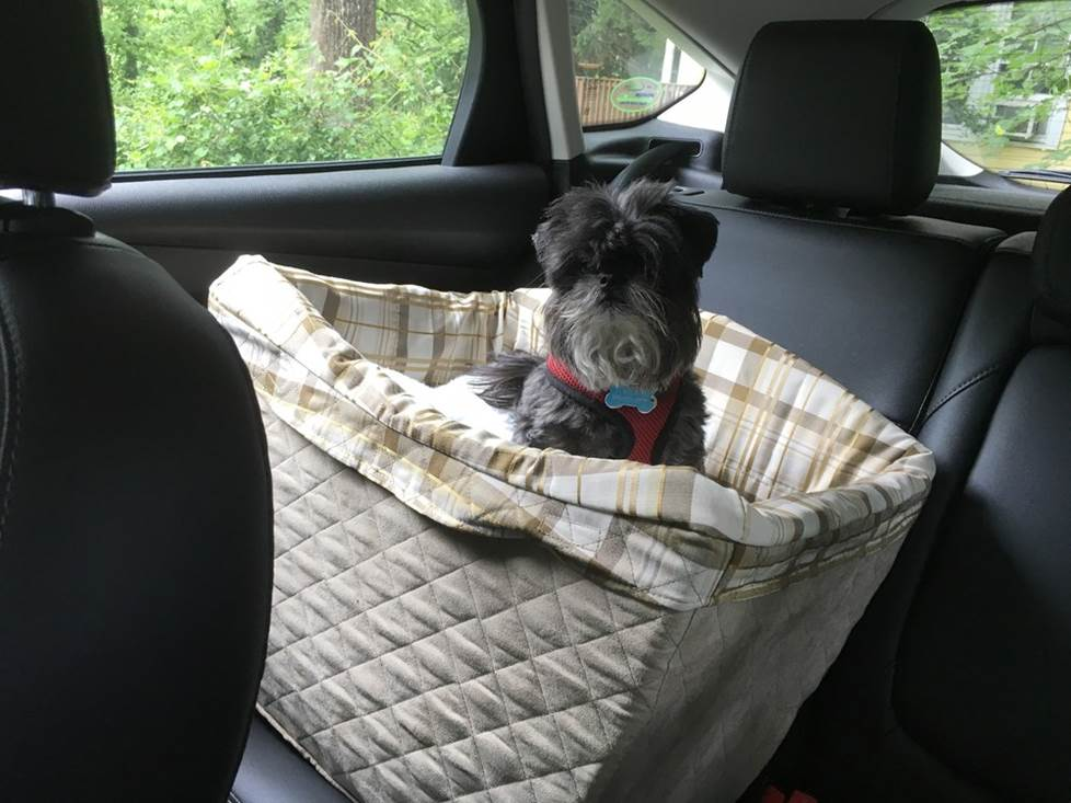 Installed PetSafe Deluxe Pet Safety Seat installed in car with dog inside.