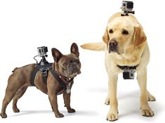 GoPro Fetch™ Dog Harness