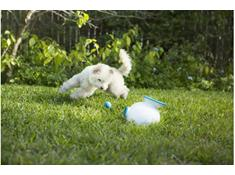 on iFetch ball launchers and toys for dogs — use promo code FETCH20 at checkout