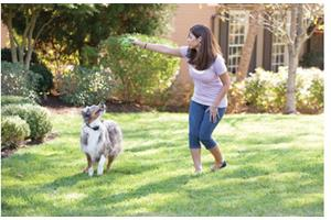 PetSafe YardMax® In-Ground Fence