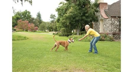 PetSafe Stay+Play Wireless Fence®