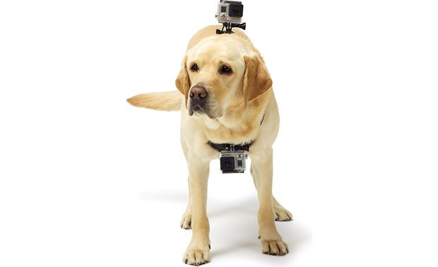 GoPro Fetch™ Dog Harness Cameras can be mounted at chest or head level