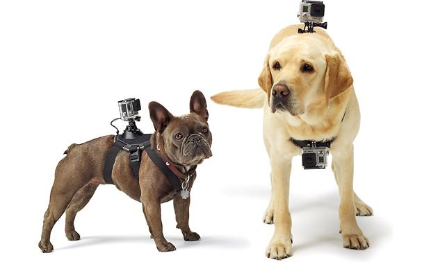 GoPro Fetch™ Dog Harness Full adjustable to fit different-sized dogs