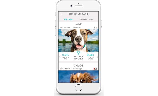 FitBark 2 Keep track of your whole pack in one place