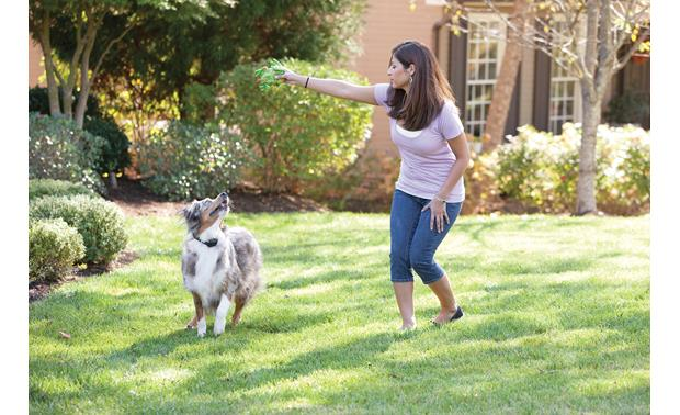 PetSafe YardMax® In-Ground Fence Play in the yard, safe from traffic