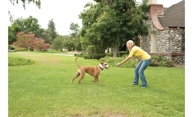 PetSafe Stay+Play Wireless Fence® It's all fun and games inside the wireless safe zone
