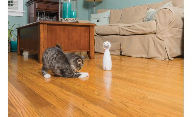 FroliCat Bolt Interactive Laser Cat Toy Up to 15 minutes of automated fun for your cat every time you turn it on