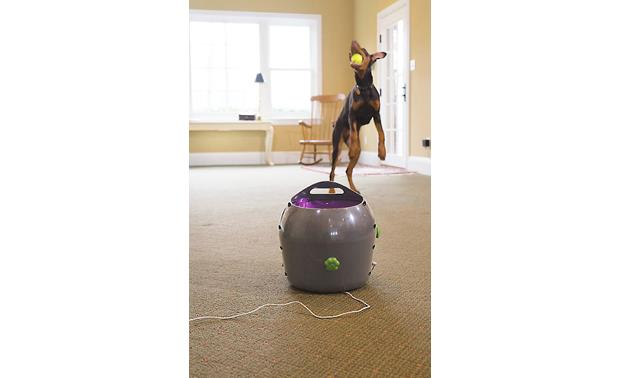 PetSafe Automatic Ball Launcher Vary the angle to match your dog's preferences
