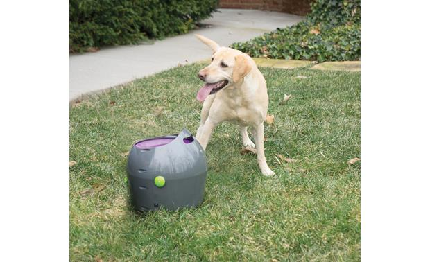 PetSafe Automatic Ball Launcher Safety sensors pause firing if you or your dog get too close to the nozzle