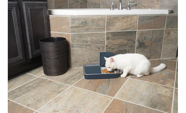 PetSafe Digital Two-Meal Feeder Keep kitty on a healthy feeding schedule