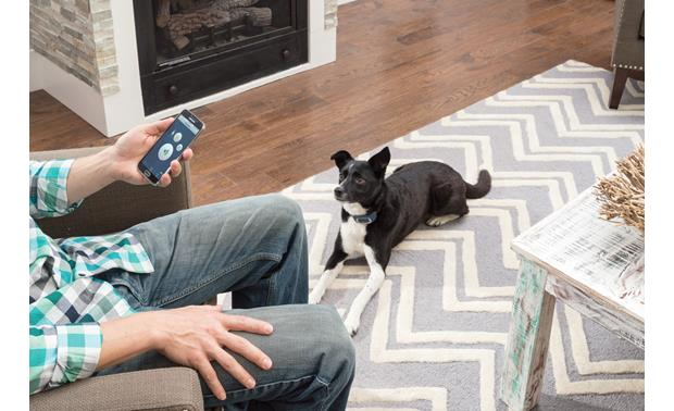 PetSafe SMART DOG® Trainer Your smartphone communicates with the collar receiver via Bluetooth
