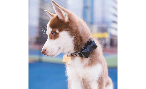 WonderWoof BowTie Activity Tracker An elegant accessory